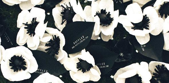 paper, flower, anemones