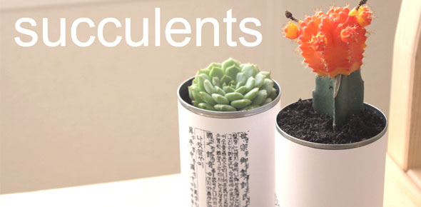 gardening, succulents, recycle, upcycle, tin cans